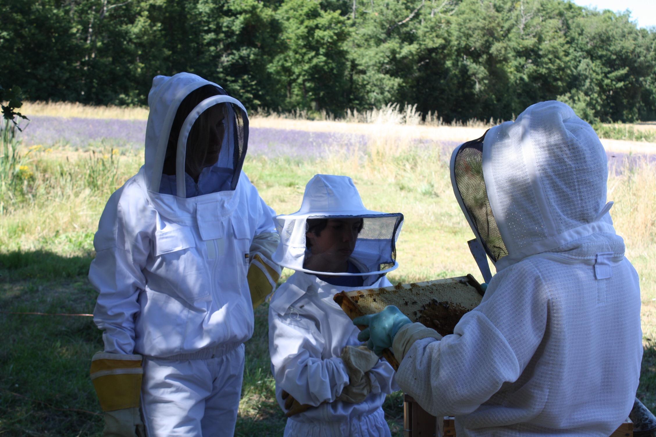 apiculteur d'un jour
